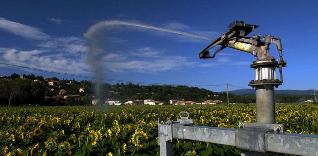 Watering a field of sunflowers
