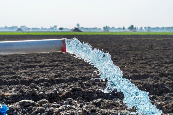 Water flowing from a pipe in a vegetable field